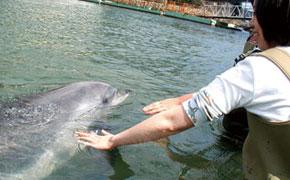 イルカとふれあえる下田海中水族館
