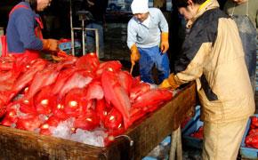 下田港の魚市場