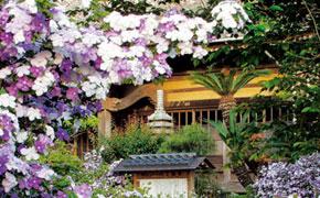 5月:了仙寺のアメリカジャスミン