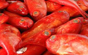 水揚げ高日本一を誇る下田の金目鯛