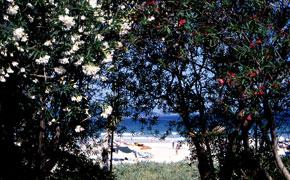 南国ムードいっぱいの入田浜ビーチ