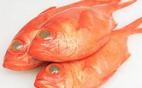 丸々と太った金目鯛