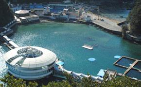自然の入り江に建てられた下田海中水族館