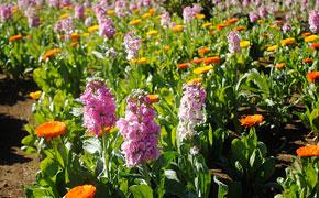 冬でも可愛らしい花が咲き誇る花園