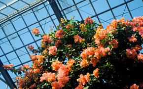 南国の植物いっぱいの温室