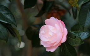 気がつけば花の町、我が町下田  -花と観光の歴史-