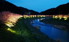 南伊豆の夜桜ライトアップ
