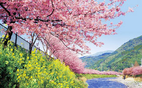 早春の南伊豆 河津桜を満喫しよう