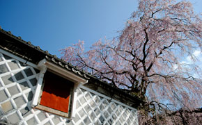桜となまこ壁