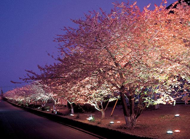 河津川沿いは、お花見ウォーキングコースとして整備されています