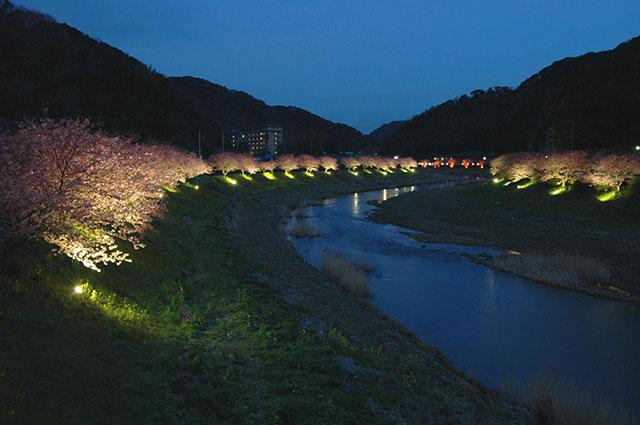 南伊豆町の夜桜ライトアップ