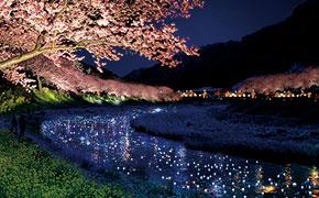 2014|早春の花巡り 河津桜と南伊豆の夜桜☆流れ星を満喫しよう!
