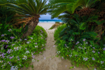 ハマダイコンの咲く入田浜