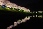 日本一早いお花見を ~みなみの桜~