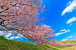 春に染まる みなみ伊豆