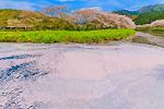 散りゆく桜に染まる那賀川