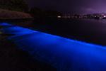 海岸を染める夜光虫