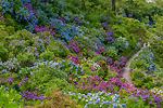 梅雨の花景色