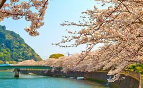春の下田は桜と桃の花